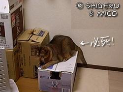 魅惑のニシジマさん
