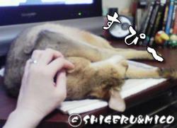 shigeru20071204.jpg