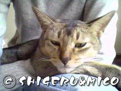 shigeru200712191.jpg