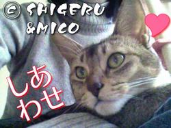 shigeru200712193.jpg